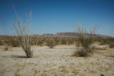 Anza Borrego Desert