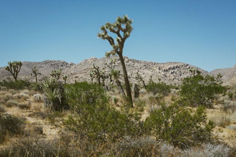 522_SD-Desert