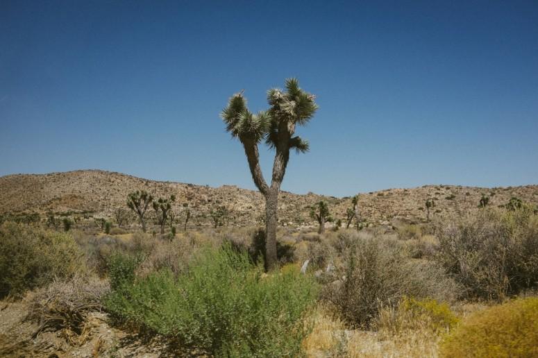 548_SD-Desert