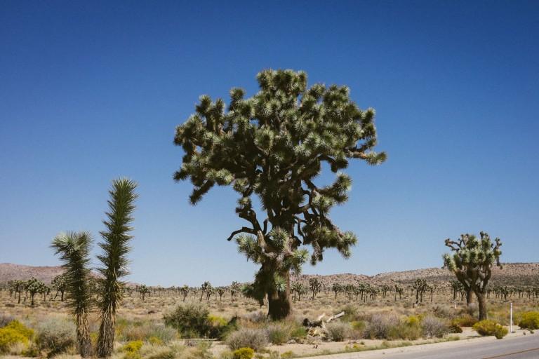 582_SD-Desert