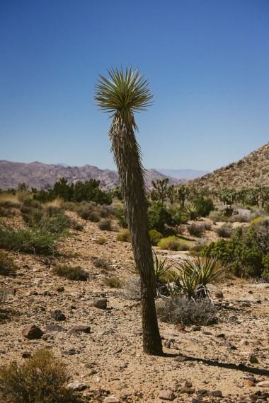 611_SD-Desert