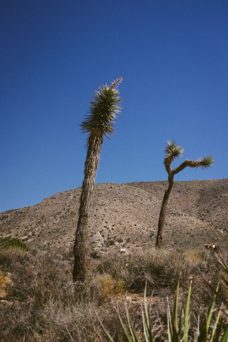 647_SD-Desert