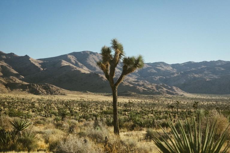 711_SD-Desert