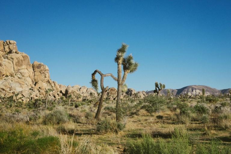 736_SD-Desert