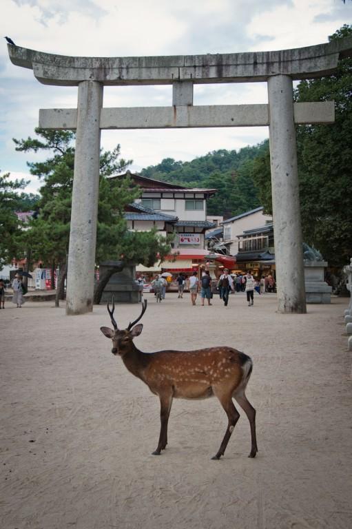 Miyajima-9394