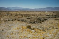 265_SD-Desert