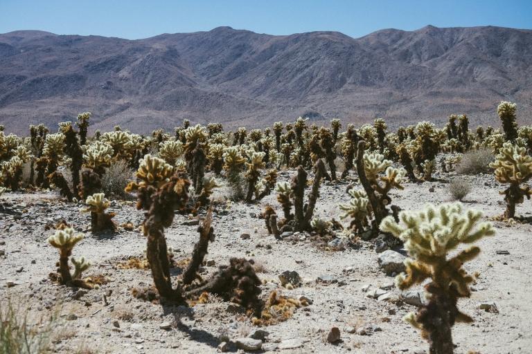 429_SD-Desert